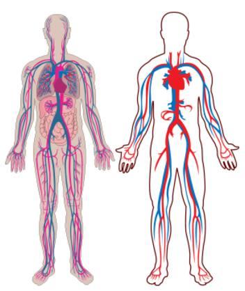 vmax afflusso sangue